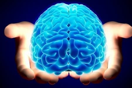 Мозги в руках