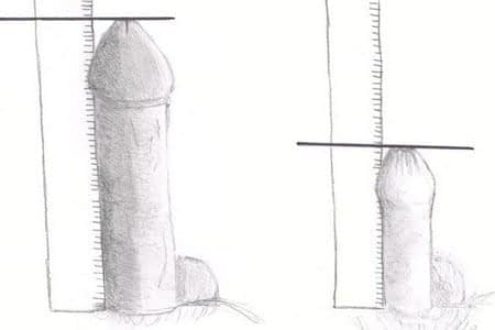 Измерение членов